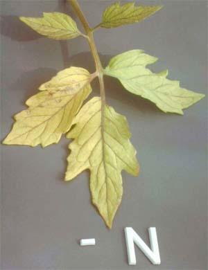 how to make nitrogen for plants