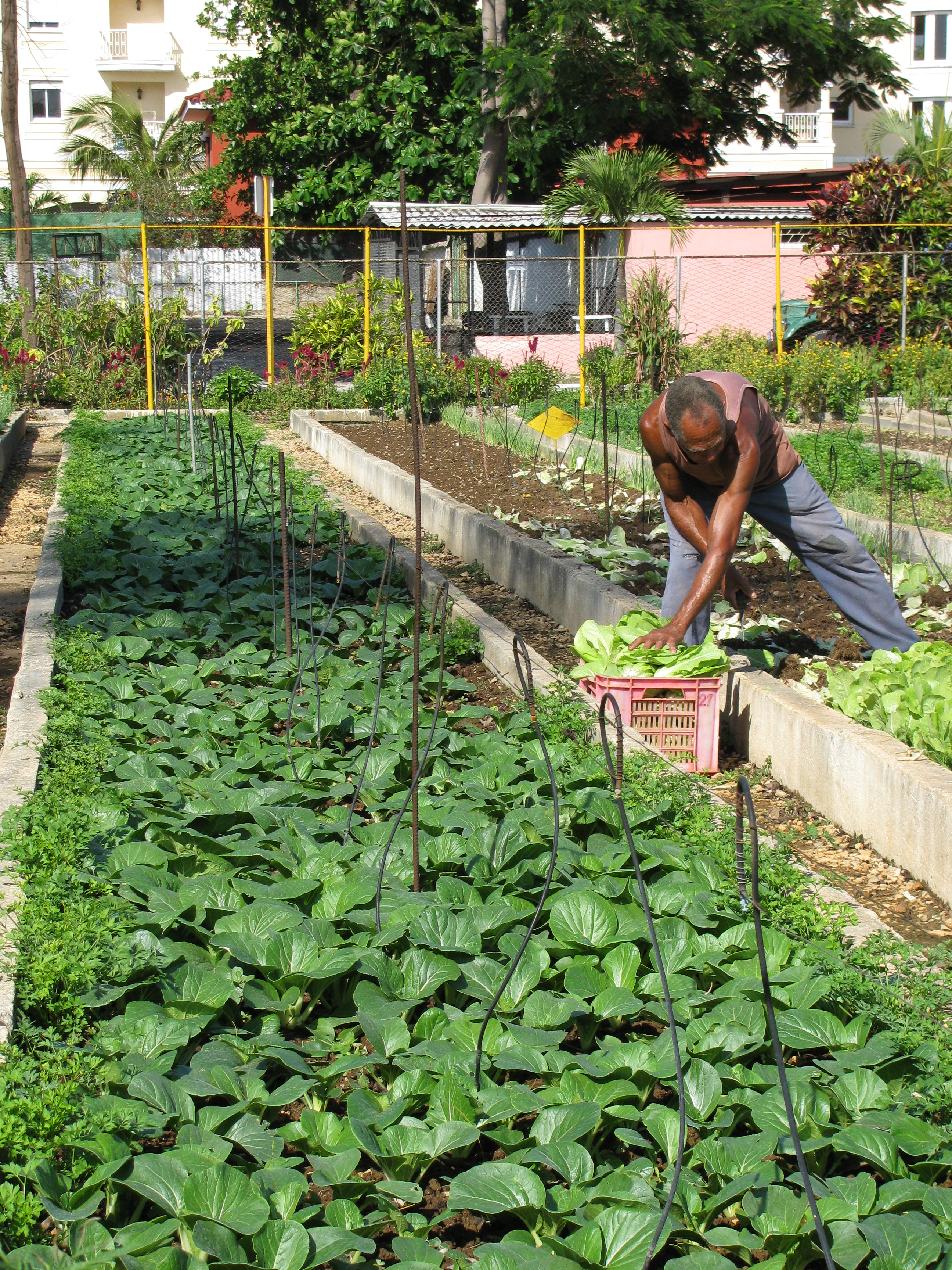 urban agriculture Academic, political, and urban communities boasting environmental, eco- nomic,  educational, and health benefits, urban agriculture has the poten- tial to make.